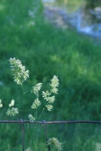 Fenced Flower