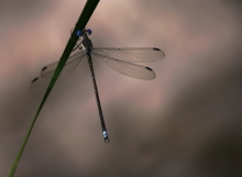 Exquisite dragonfly