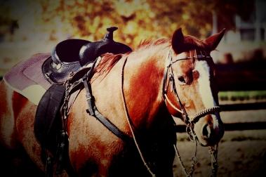 Photochrom horse