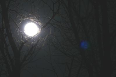 Moonlight Silhouette