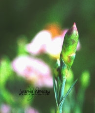 Art of spring
