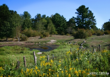 Goldenrod pond