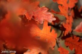 Autumn jumble