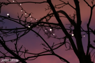 Lights amid branches