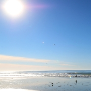 Torrey Island State Beach