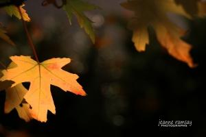 Fall Gold