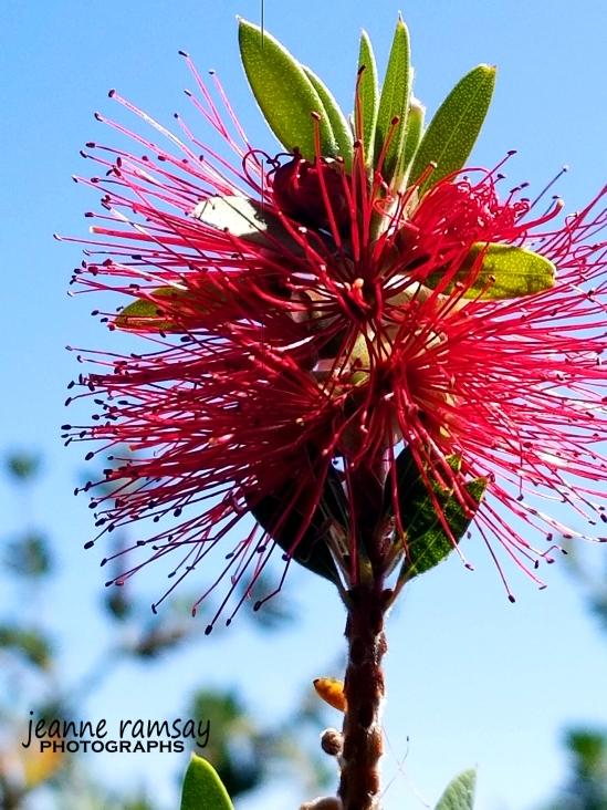 Monaco Pink Flower